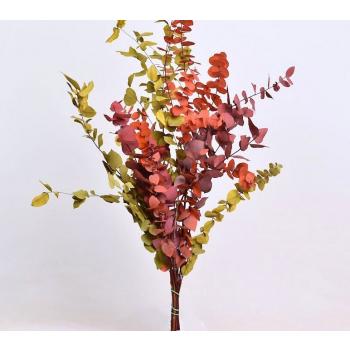 Eucalyptus Stuartiana mix preserved