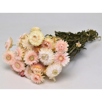Dried Helichrysum white pink (185 gr)
