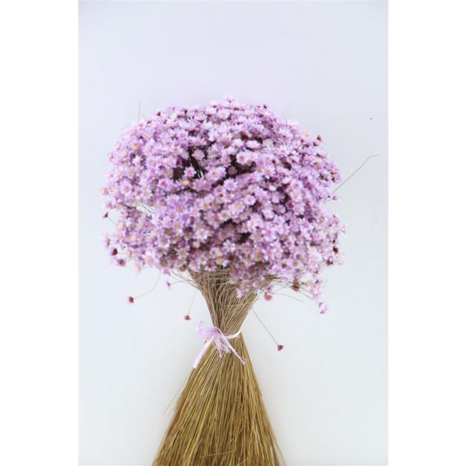 Glixia (Star flower) lavender 100 grams