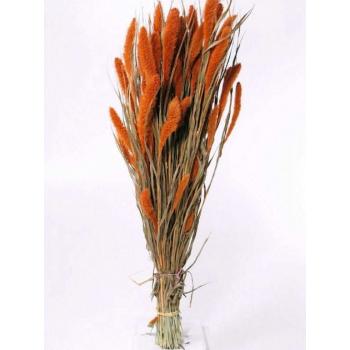 Foxtail dried (125 gr) orange