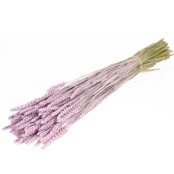 Dry Wheat Bunch with a lilac misty color treatment