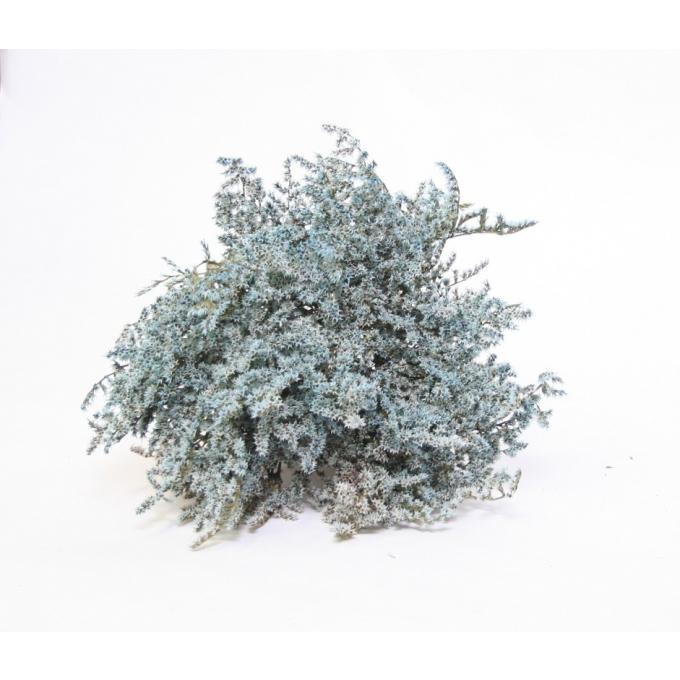 Statice Tatarica light blue dried