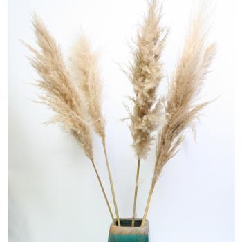 Dried Pampas grass light brown soft well-filled (3 pieces)