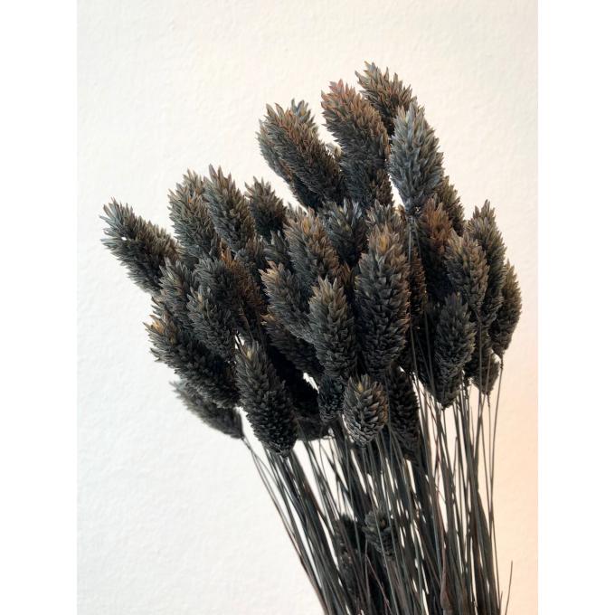 Dried Phalaris bleached dark grey