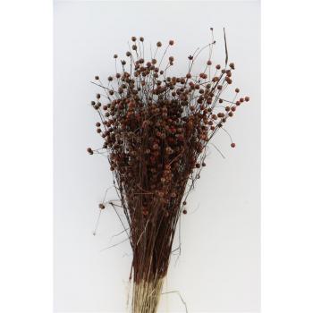 Dried Lino Flax Brown