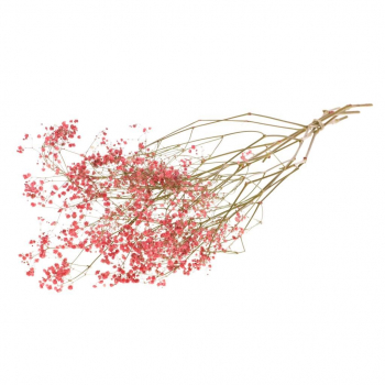 Gypsophila cerise dyed dried per 5 branches