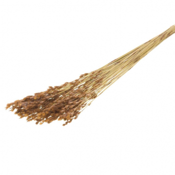 Dried thatch reed