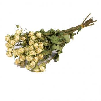 Dried spray roses white