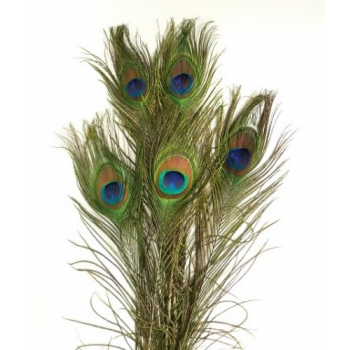 Peacock feathers (artificial) long