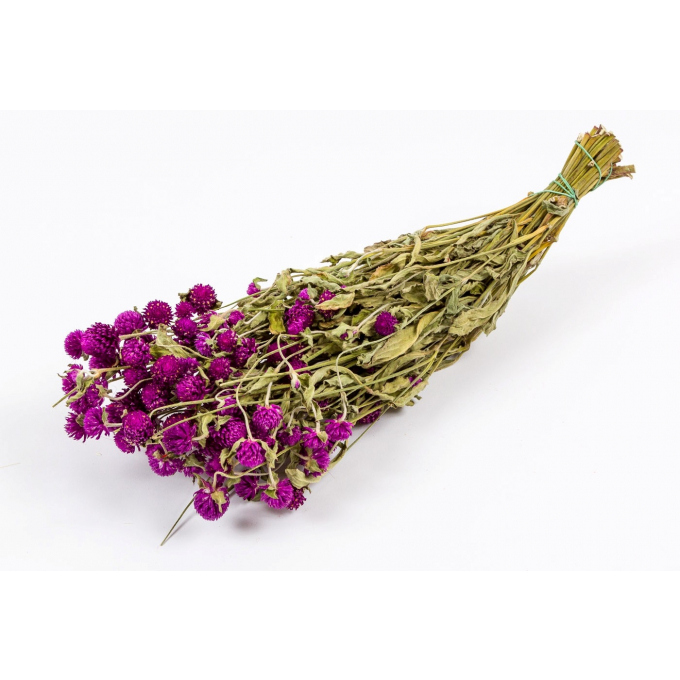Dried Gomphrena lilac