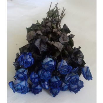 Bunch of dried blue Roses 10 stems