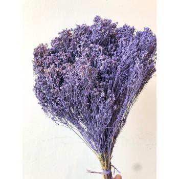 Broom bloom purple dried (100 gr)