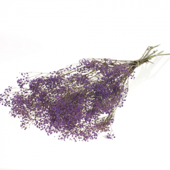 Gypsophila dried preserved bleached lilac