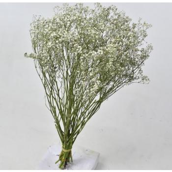 Dried Gypsophila white 5 stems