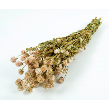 Dried Gomphrena pale pink