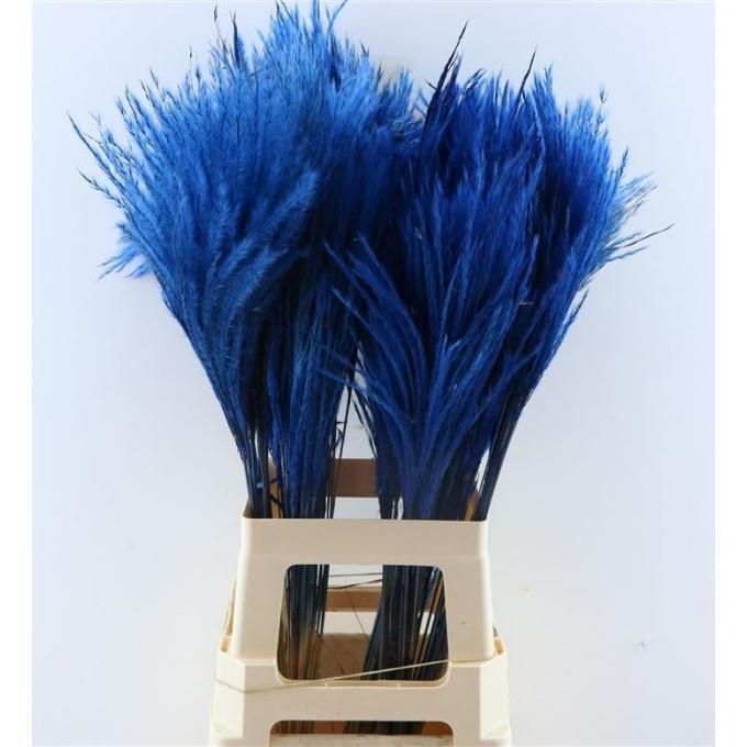 Fluffy Reed grass plumes dark blue