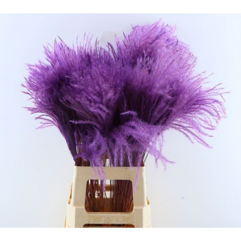 Fluffy Reed grass plumes purple