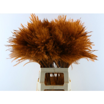 Fluffy Reed grass plumes choco