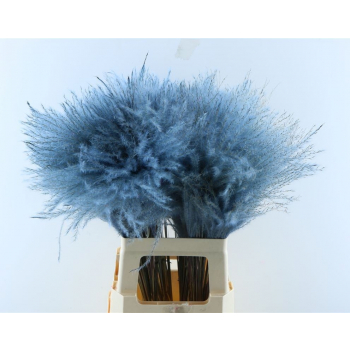Fluffy Reed grass plumes pale blue