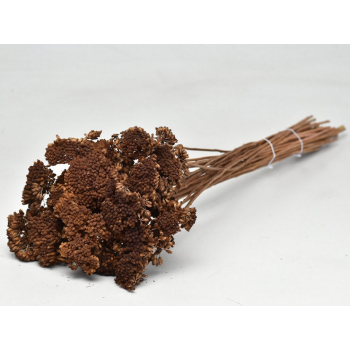 Brown dried Achillea