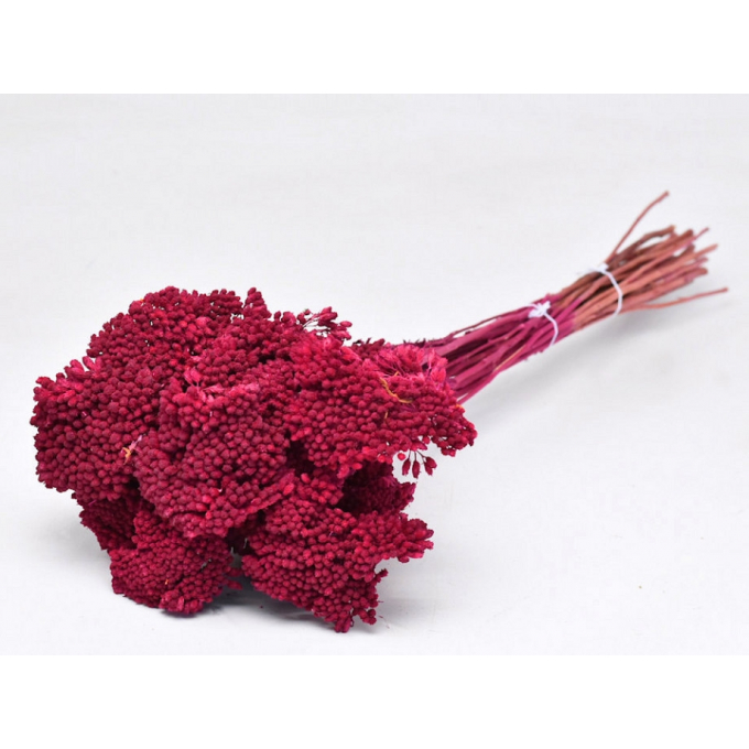 Pink dried Achillea
