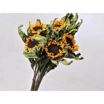 Bunch of dried Sunflowers (10 stems)
