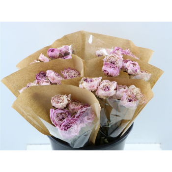 Peony roses pink dried