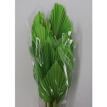 Spades Spears Palm apple green
