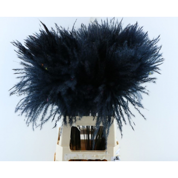 Fluffy Reed grass plumes black