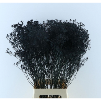 Gypsophila black dyed dried per 5 branches