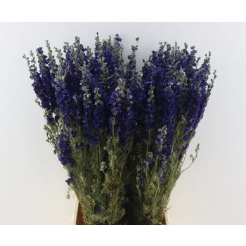 Dried Delphinium dark blue