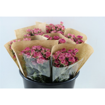 Dried pink spray roses
