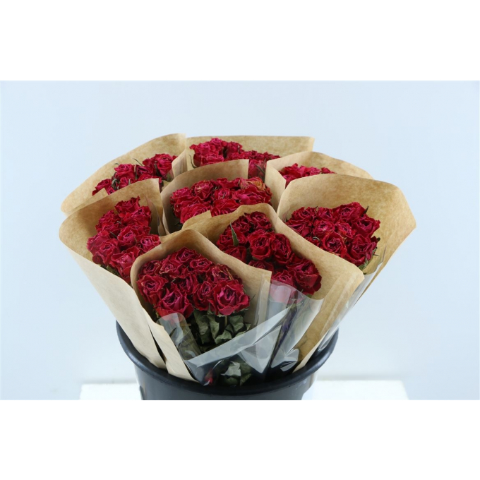 Dried short red Roses per bunch of 10 Roses