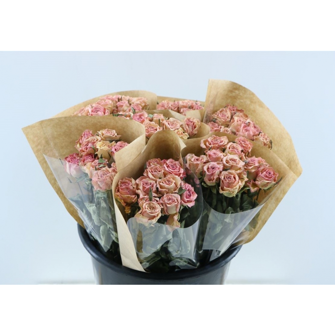 Dried short pink Roses per bunch of 10 Roses