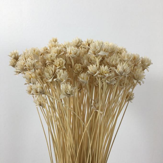 Hill flower bleached