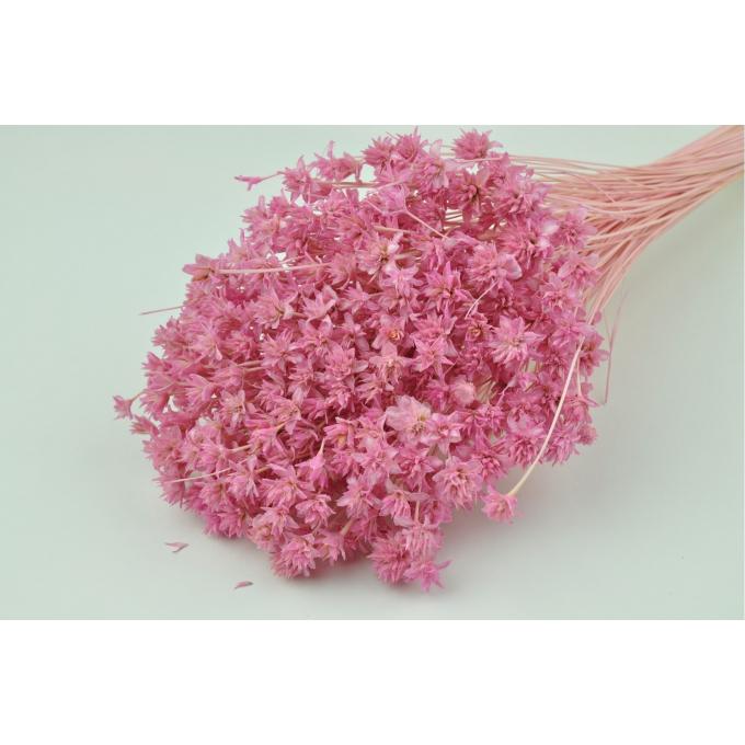 Hill flower bleached pink