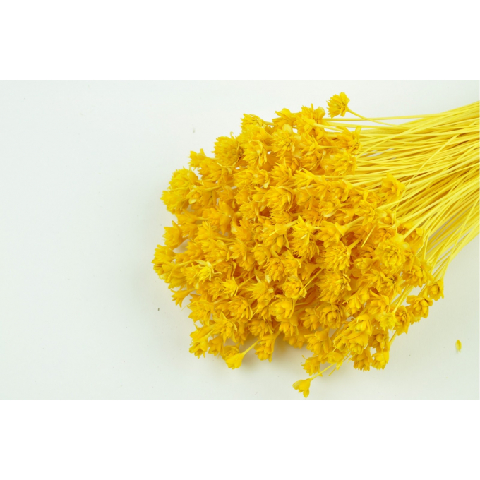 Hill flower bleached yellow