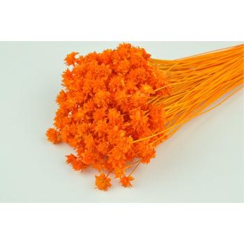 Hill flower bleached orange