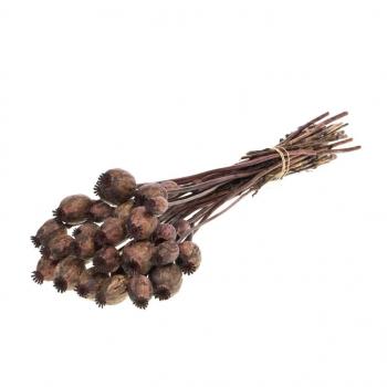 Dried Poppy dark brown