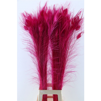 Peacock feathers cerise (artificial) long