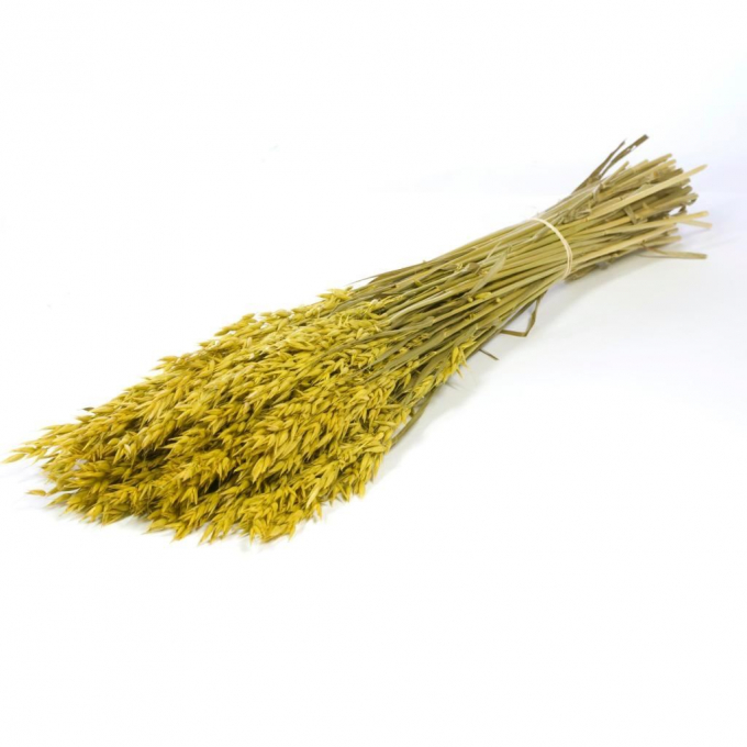Dried Oats colored yellow
