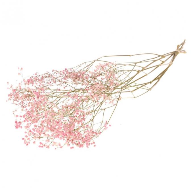 Gypsophila pink dyed dried