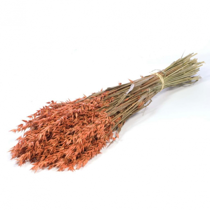 Dried Oats (Avena) orange colored