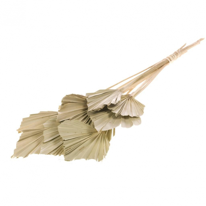 Spades Spears Palm mini naturel