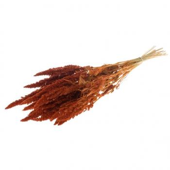 Amaranthus dried Orange