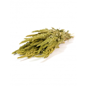 Bunch of dried Amaranthus green
