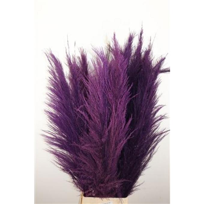 Dried Pampas grass purple thinner plume