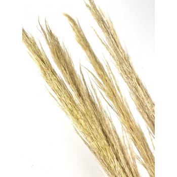 Arundo donax dried